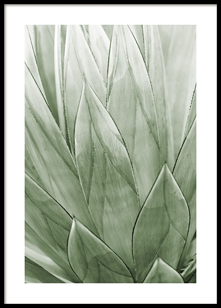 Agave Plant Poster in the group Posters & Prints / Botanical / Green plants at Desenio AB (13612)