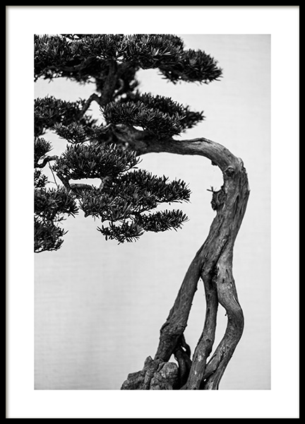 Bonsai Tree Poster in the group Posters & Prints / Botanical at Desenio AB (13634)