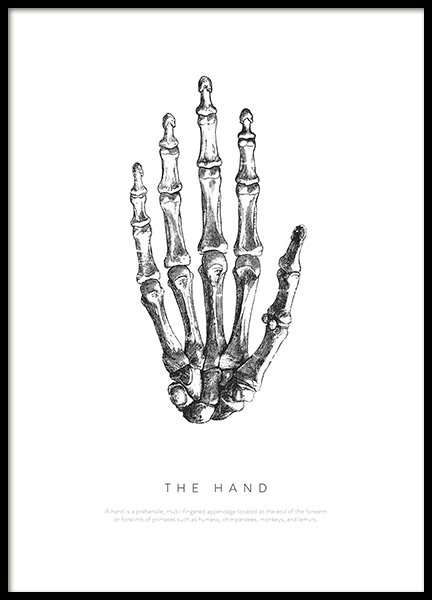 Hand Anatomy Poster in the group Posters & Prints / Illustrations at Desenio AB (13729)