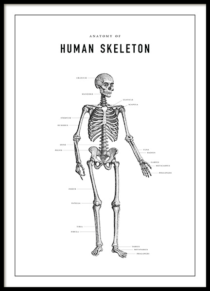 Human Skeleton Anatomy Poster in the group Posters & Prints / Illustrations at Desenio AB (13731)