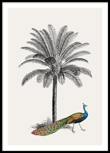 Royal Botanical Peacock Poster in the group Posters & Prints / Insects & animals / Birds at Desenio AB (13733)