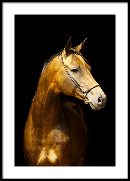 Glowing Horse Poster in the group Posters & Prints / Insects & animals / Horses at Desenio AB (13763)