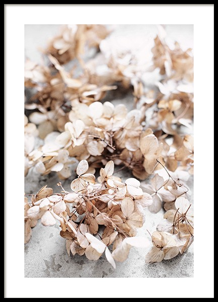 Dried Hydrangea Flowers Poster in the group Posters & Prints / Botanical / Flowers at Desenio AB (13827)