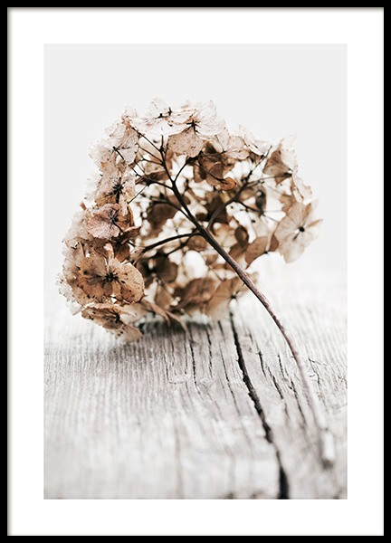 Hydrangea Twig Poster in the group Posters & Prints / Botanical / Flowers at Desenio AB (13828)