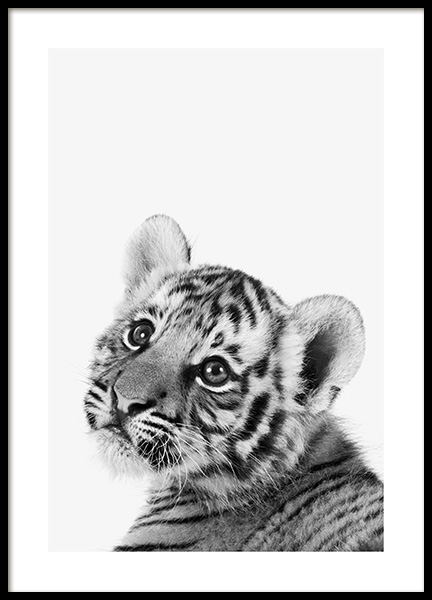 Baby Tiger Poster in the group Posters & Prints / Insects & animals at Desenio AB (13857)