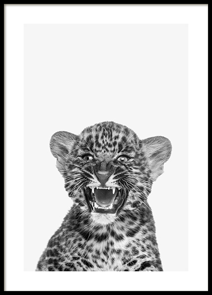 Baby Leopard Poster in the group Posters & Prints / Insects & animals at Desenio AB (13858)