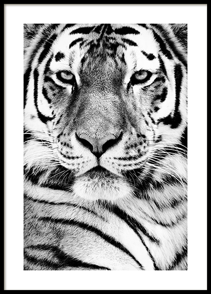 Tiger Portrait Poster in the group Posters & Prints / Insects & animals / Wild animals at Desenio AB (13865)