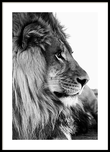 Lion Profile Poster in the group  at Desenio AB (13866)