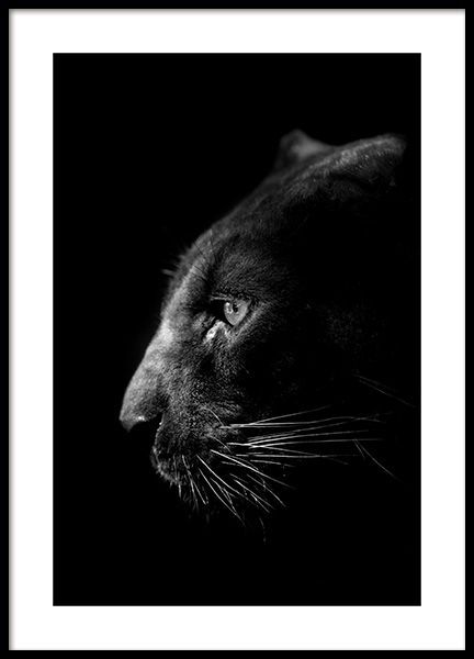 Panther B&W Poster in the group Posters & Prints / Insects & animals / Wild animals at Desenio AB (13867)