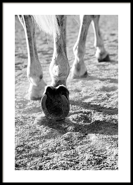 Horse Hoofs Poster in the group Posters & Prints / Insects & animals / Horses at Desenio AB (13914)