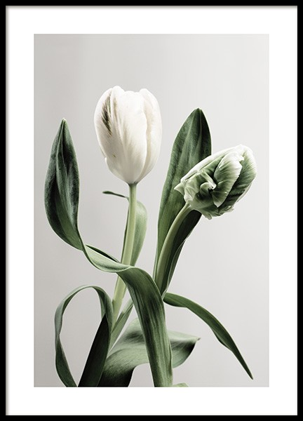 Green Tulips Poster in the group  at Desenio AB (13973)