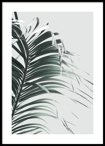 French Palm Leaf Poster in the group Posters & Prints / Botanical / Palms at Desenio AB (13985)