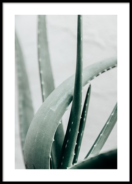 Aloe Vera Plant Poster in the group Posters & Prints / Botanical / Green plants at Desenio AB (13987)