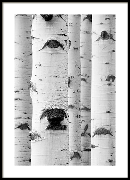 Birch Trees Poster in the group Posters & Prints / Nature at Desenio AB (13999)