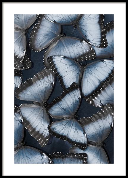 Morpho Butterflies Poster in the group Posters & Prints / Insects & animals / Insects at Desenio AB (14010)