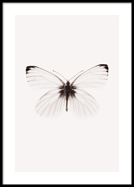 White Butterfly Poster in the group Posters & Prints / Insects & animals / Insects at Desenio AB (14012)