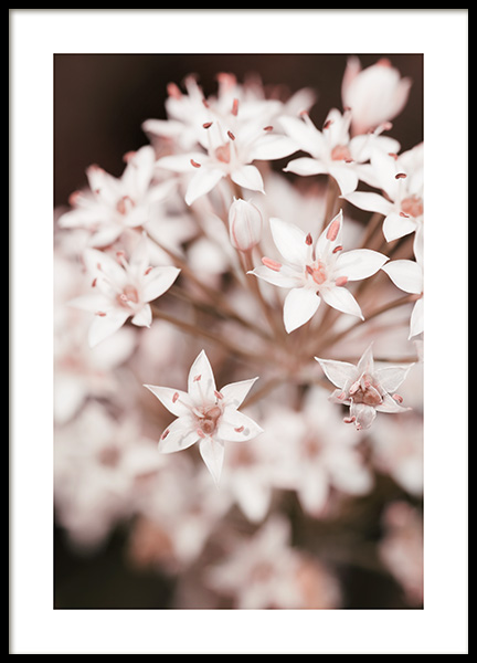 Spring Chives Flower Poster in the group Posters & Prints / Botanical / Flowers at Desenio AB (14096)