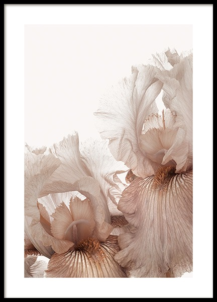 Iris Flowers Poster in the group Posters & Prints / Botanical / Flowers at Desenio AB (14102)
