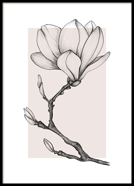 Magnolia Drawing No1 Poster in the group Posters & Prints / Botanical / Flowers at Desenio AB (14112)