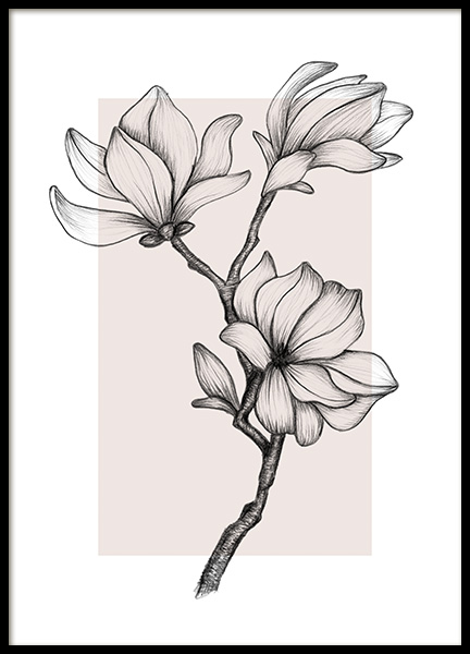 Magnolia Drawing No2 Poster in the group Posters & Prints / Botanical / Flowers at Desenio AB (14113)