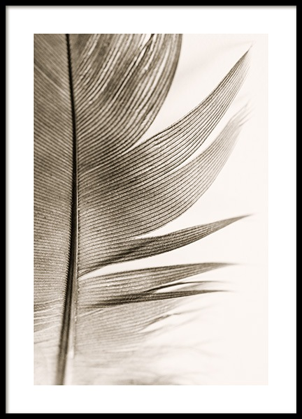 Soft Feather Poster in the group Posters & Prints / Photography at Desenio AB (14205)