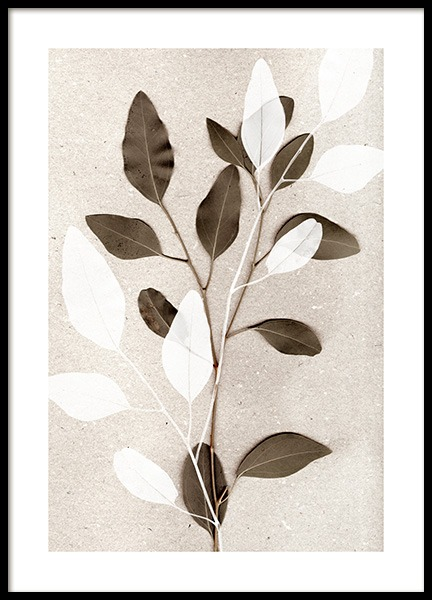 Eucalyptus No1 Poster in the group Posters & Prints / Botanical / Green plants at Desenio AB (14209)