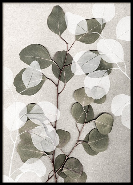 Eucalyptus Art No1 Poster in the group Posters & Prints / Botanical / Green plants at Desenio AB (14257)