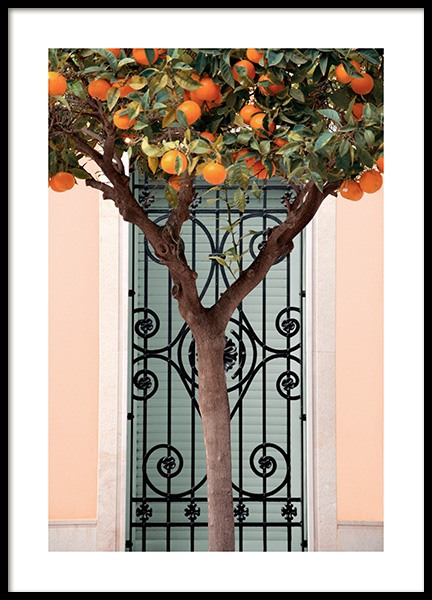 Orange Tree in Valencia Poster in the group Posters & Prints / Photography at Desenio AB (14325)