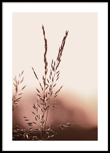 Sunset Meadow Poster in the group Posters & Prints / Botanical / Green plants at Desenio AB (14533)