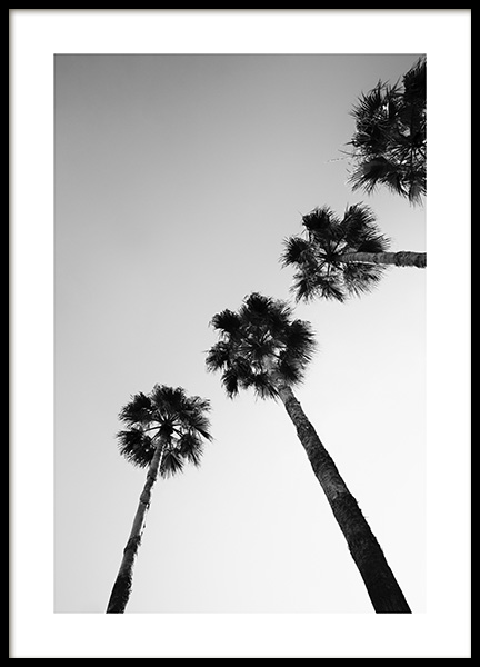Palm Tree Line Up Poster in the group Posters & Prints / Botanical / Palms at Desenio AB (14573)