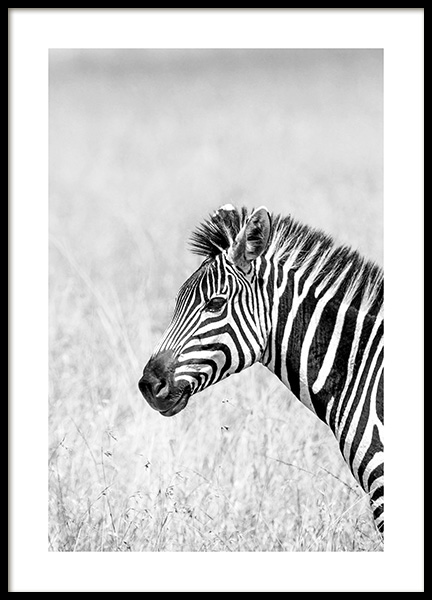 Zebra in the Grass Poster in the group Posters & Prints / Insects & animals / Wild animals at Desenio AB (14582)