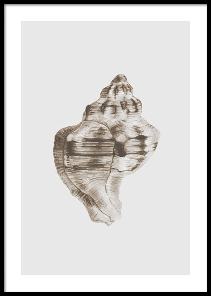 Whelk Shell Poster in the group Posters & Prints / Art prints at Desenio AB (14706)