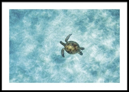 Green Sea Turtle Poster in the group Posters & Prints / Insects & animals at Desenio AB (14781)