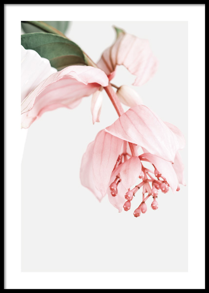Rose Grape Flower Poster in the group Posters & Prints / Botanical / Flowers at Desenio AB (14817)