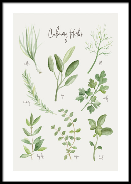 Summer Herbs Poster in the group Posters & Prints / Kitchen / Kitchen guides at Desenio AB (14839)