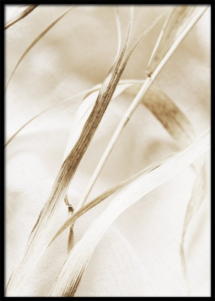 – Photograph with close up of a beige leaf on dried grass