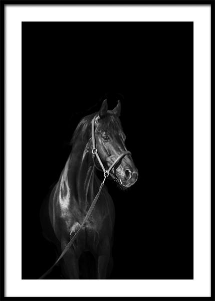 Dark Champion Poster
