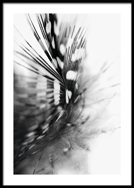 Spotted Feather Poster