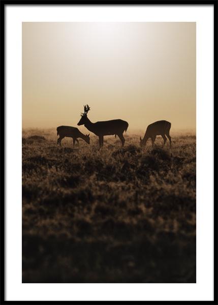 Deer in Bushy Park Poster