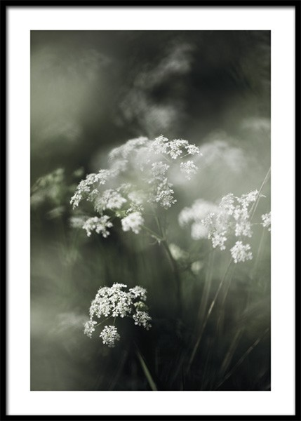 Misty Meadow Flower Poster in the group Posters & Prints / Photography at Desenio AB (15013)