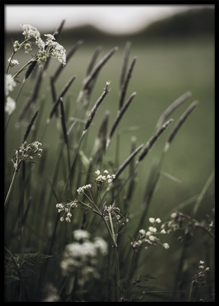 Grass In Bloom Poster