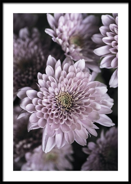 Light Purple Petals Poster
