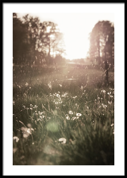 Meadow At Sunset Poster in the group Posters & Prints / Photography at Desenio AB (15031)