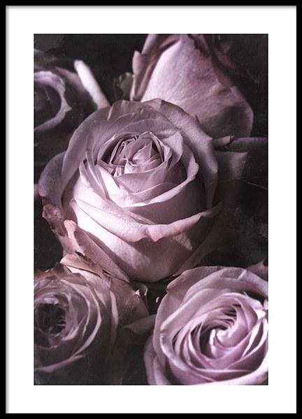 Antique Rose Bouquet Poster