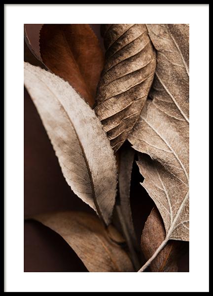 Brown Leaves Poster