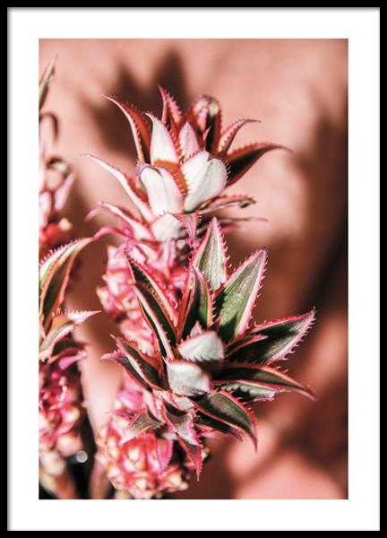 Pineapple Flower No2 Poster