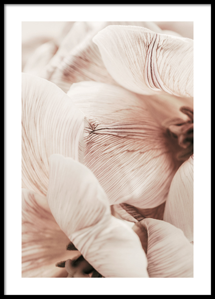 Soft Tulips No2 Poster