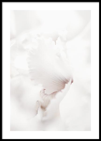 Pale Petals Poster