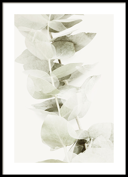 Abstract Eucalyptus No2 Poster