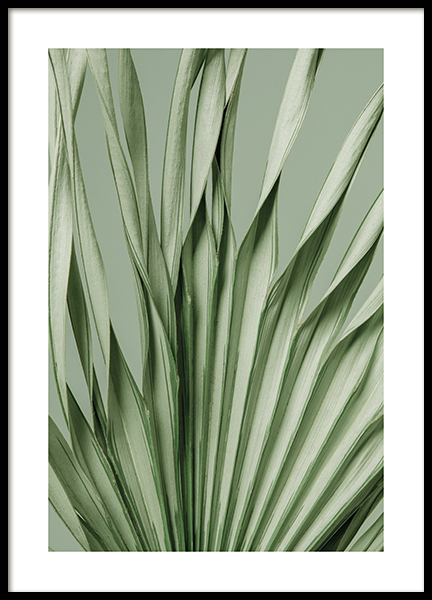 Twisted Palm Poster